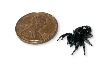 spider-scale