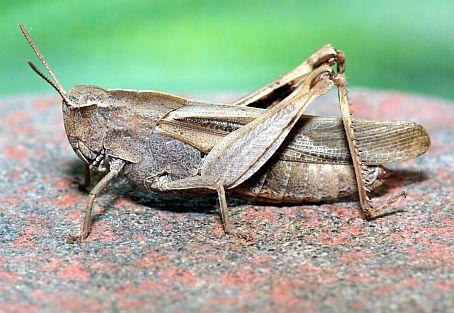 tan-grasshopper-ct-scan